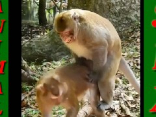 Animal Sex Video - Monkey sex in Park / Dog Sex / pet Sex HD